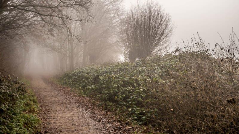 Tidig vintermorgondimma på skogbanan arkivbild