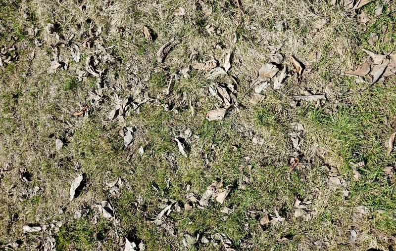 Tidigt grönt vårgräs på gräsmattan royaltyfri fotografi