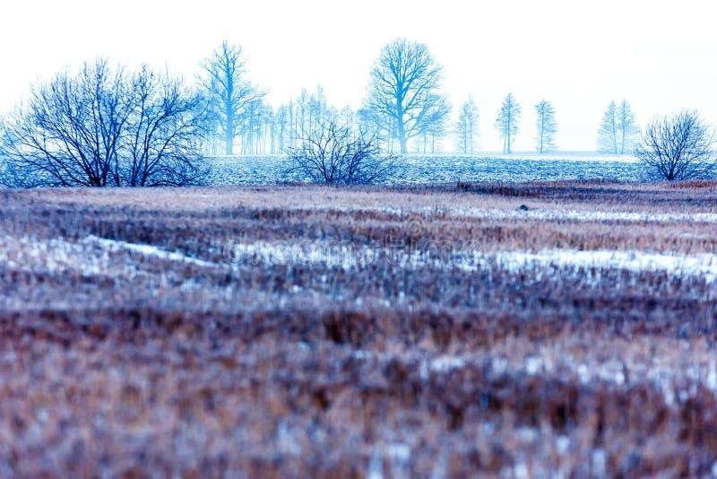 tidigt mulen, dimmig kall vintermorgon fotografering för bildbyråer