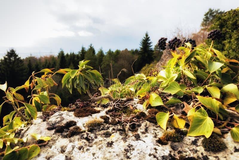 Tidigt Spring Hill landskap i den Franconian schweizaren royaltyfri foto