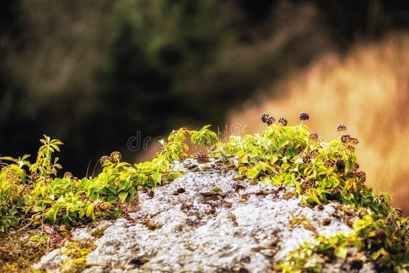 Tidigt Spring Hill landskap i den Franconian schweizaren arkivfoton