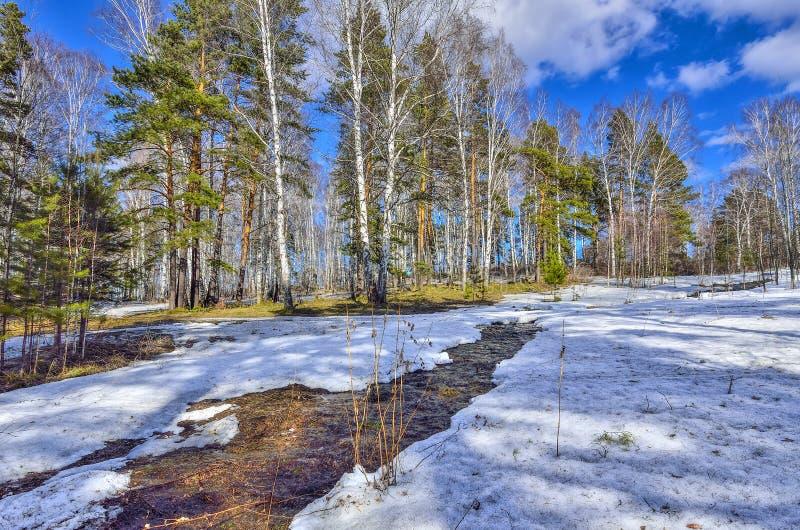 Tidigt vårlandskap i skog med den smältande snö och bäcken royaltyfria bilder