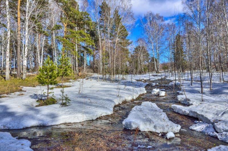 Tidigt vårlandskap i skog med den smältande snö och bäcken arkivfoton
