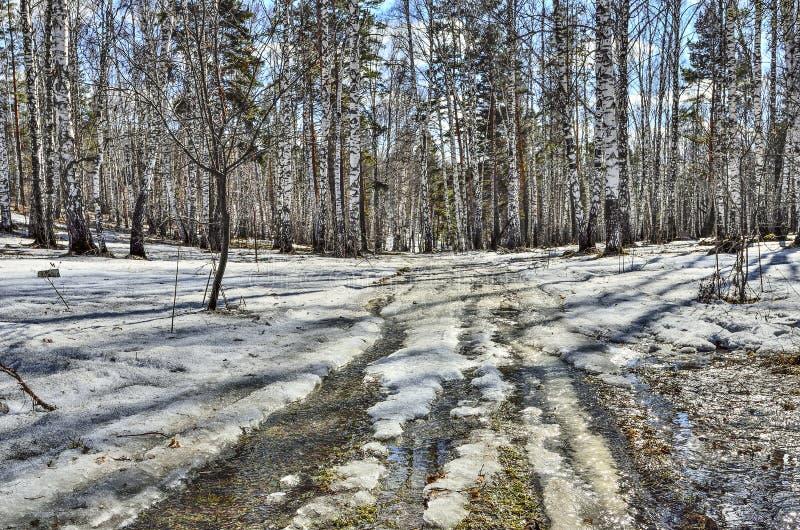 Tidigt vårlandskap i skog med den smältande snö och bäcken arkivfoto