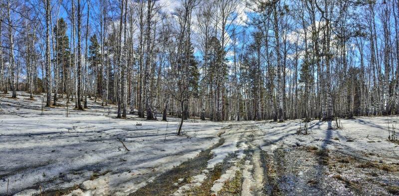 Tidigt vårlandskap i skog med den smältande snö och bäcken arkivbilder