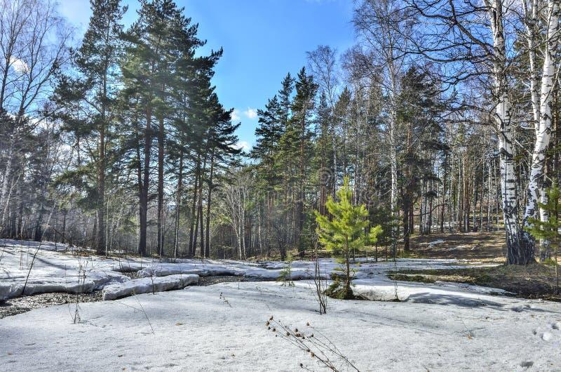Tidigt vårlandskap i skog med den smältande snö och bäcken arkivbild