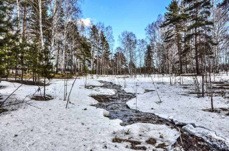 Tidigt vårlandskap i skog med den smältande snö och bäcken royaltyfria foton