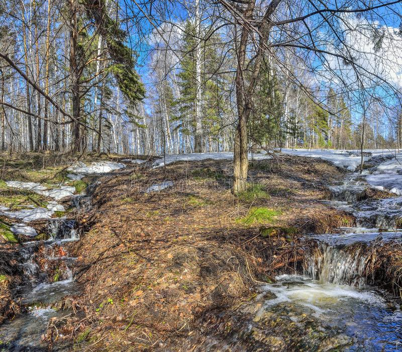 Tidigt vårlandskap i skog med smältande snö och bäckar royaltyfri foto