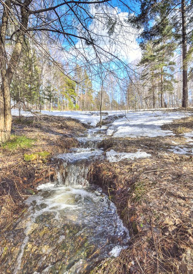 Tidigt vårlandskap i skog med smältande snö och bäckar arkivbild