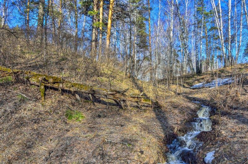 Tidigt vårlandskap i skog med smältande snö och bäckar arkivbilder