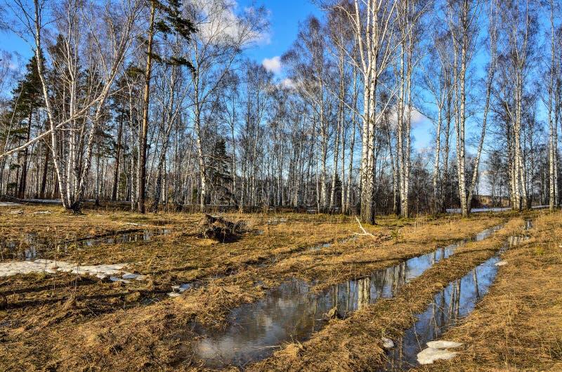 Tidigt vårlandskap i skog med smältande snö och vatten royaltyfria foton