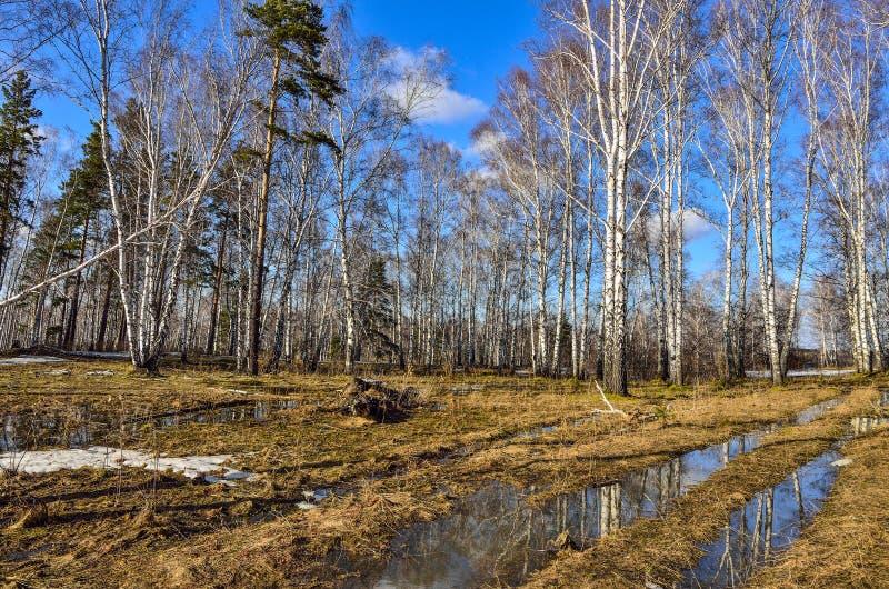 Tidigt vårlandskap i skog med smältande snö och vatten fotografering för bildbyråer