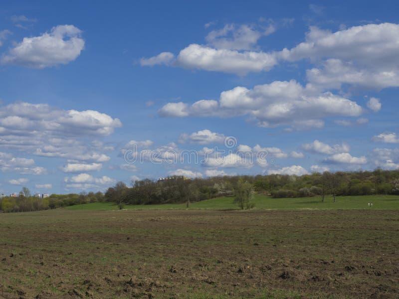 Tidigt vårPrague landskap med det bruna fältet, grönt gräs, träd med nya frodiga sidor och blå himmel, vita fluffiga moln fotografering för bildbyråer