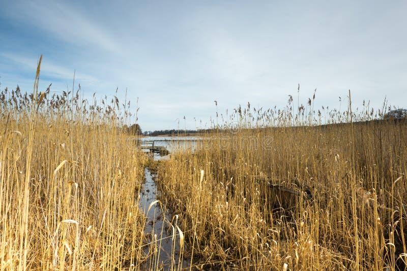 Tidigt vårsjölandskap royaltyfria foton