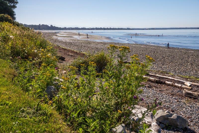 Tidvatten går tillbaka exponera tidvattens- lägenheter för familjgyckel på stranden royaltyfri foto