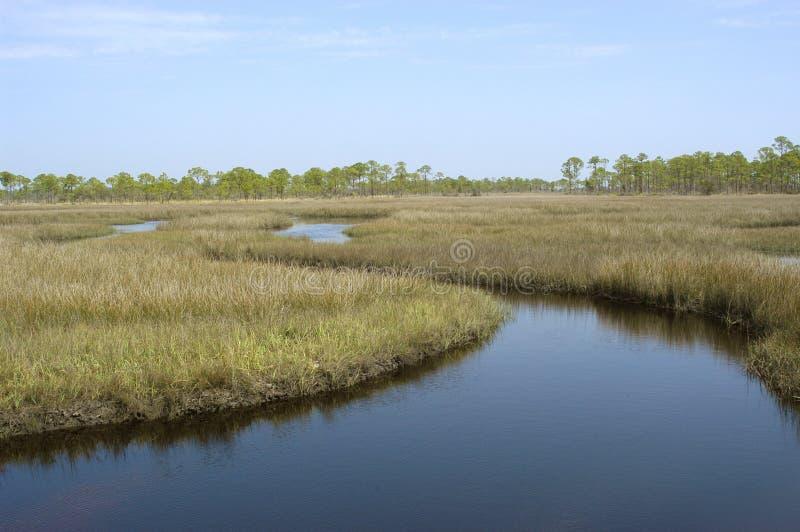 tidvattens- marsh royaltyfri fotografi