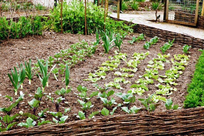 tidy grönsak för lapp mycket royaltyfria bilder