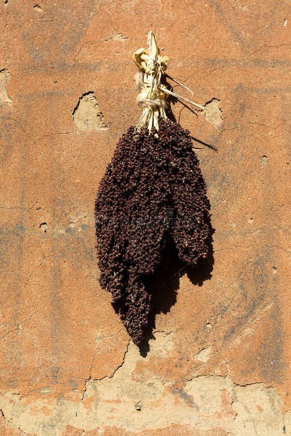Tiebelè. kassena village. Millet left to dry in Tiebelè, , Burkina Faso stock photography