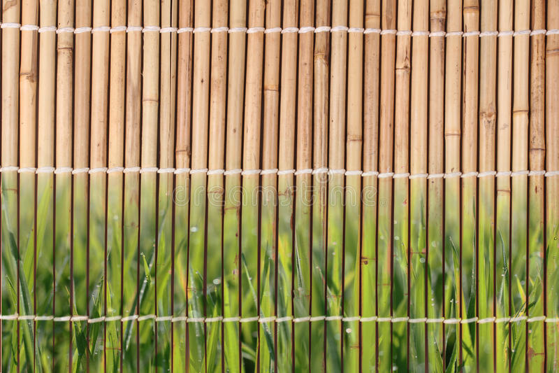 Tied of dried bamboo stalks pattern in Japanese style. royalty free stock photography