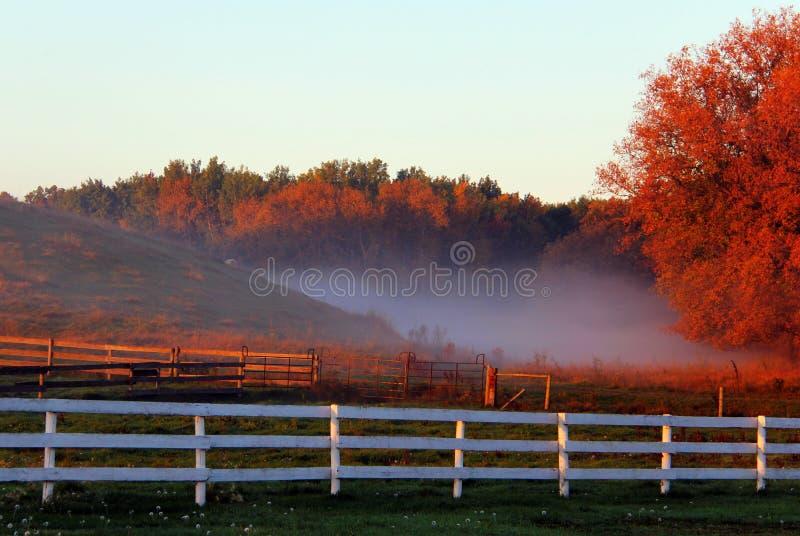 Tief liegend Nebel in Manitoba-Herbst, im zentralen SüdGrasland stockfotografie