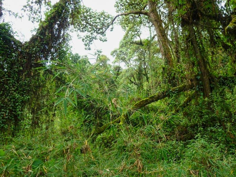 tiefer Dschungel in der Sommerzeit in Afrika lizenzfreies stockfoto