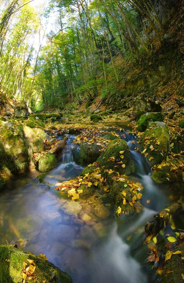 Tiefer hölzerner Fluss stockbilder