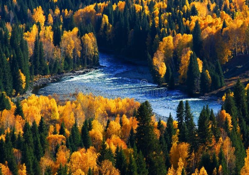 Tiefer Herbst stockbild