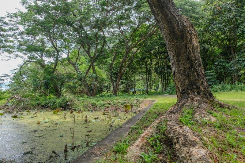Tiefer Regenwald haben Teich in Nationalpark Khao Samroiyod prachubkirikhun stockbild