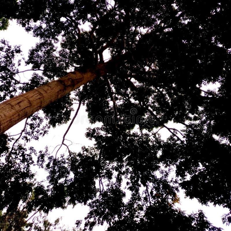Tiefer Wald stockbilder