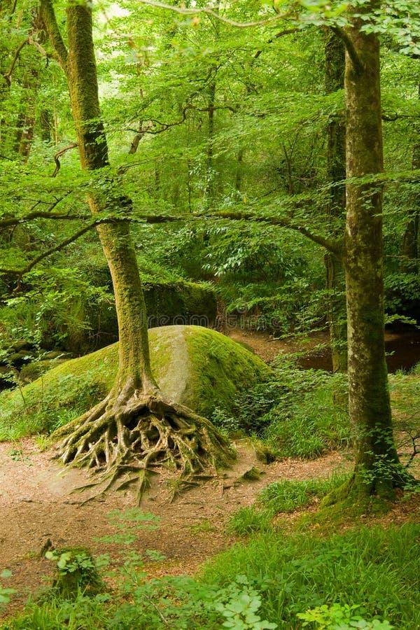 Tiefer Wald in Bretagne, Frankreich lizenzfreies stockbild