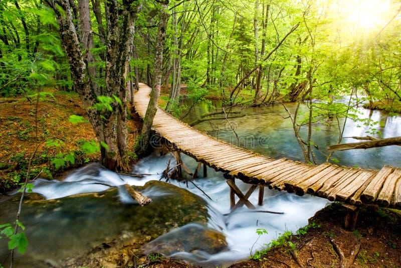 Tiefer Waldstrom mit haarscharfem Wasser im Sonnenschein Plitvice Seen, Kroatien stockfotos