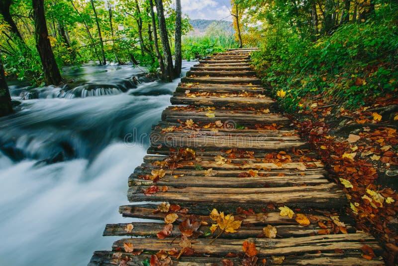 Tiefer Waldstrom mit haarscharfem Wasser mit hölzernem pahway Plitvice Seen, Kroatien UNESCO lizenzfreie stockfotografie