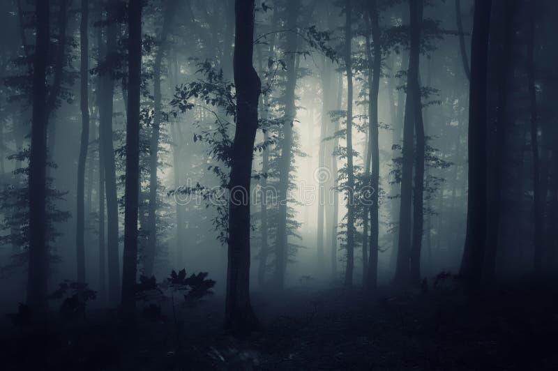 Tiefes dunkles Holz mit gruseligem Nebel stockfotografie