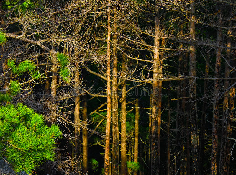 Tiefes Holz stockbilder