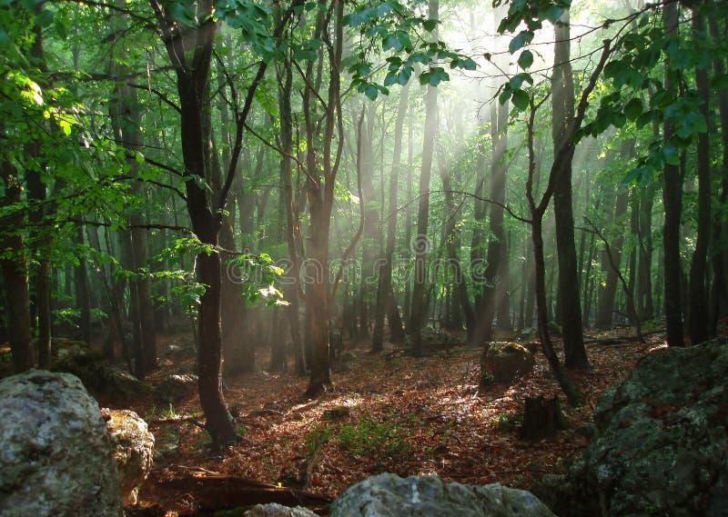 Tiefes Holz lizenzfreie stockfotos