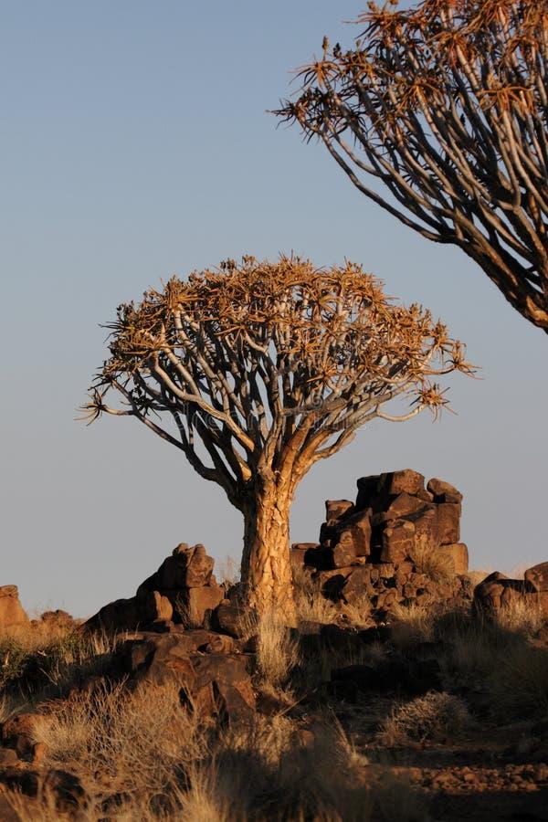 Download Tiemble los árboles imagen de archivo. Imagen de paisaje - 7150587