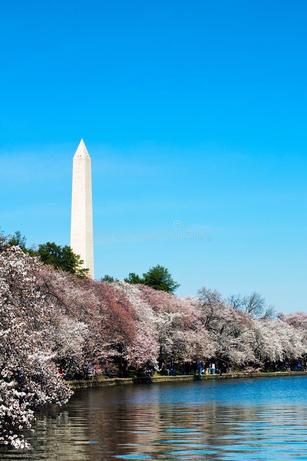 Tiempo de la cereza, Washington DC imagen de archivo