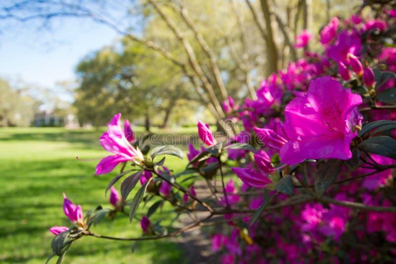 Tiempo de primavera dulce imagenes de archivo