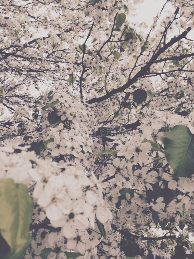Tiempo de primavera en la floración imagenes de archivo
