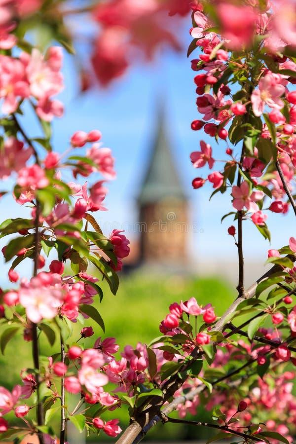 Tiempo de primavera en una ciudad fotos de archivo libres de regalías