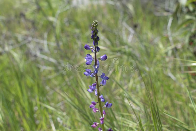 Tiempo de primavera púrpura de las flores fotos de archivo
