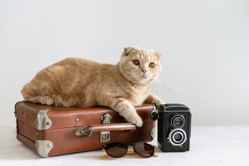 Tiempo de vacaciones Gato lindo en la maleta del vintage, la cámara retra y las gafas de sol en el fondo blanco Viaje, concepto d fotografía de archivo libre de regalías