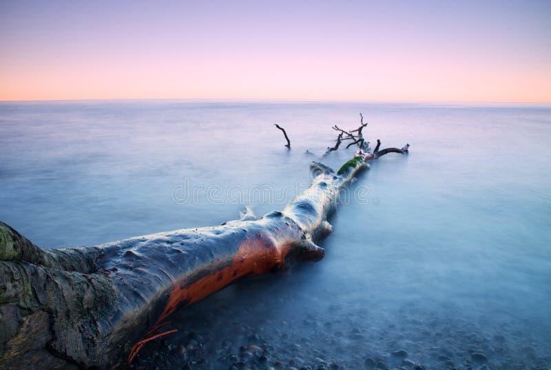 Tiempo romántico de la puesta del sol Árbol caido solo en la costa costa pedregosa vacía Árbol de la muerte con las ramas en agua imagen de archivo libre de regalías