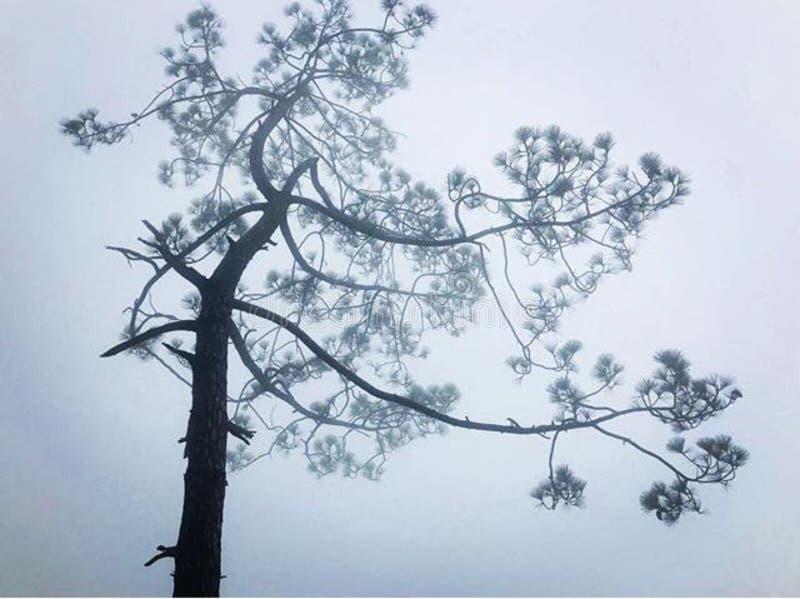 Tiempo y hermosa vista de niebla del árbol foto de archivo libre de regalías