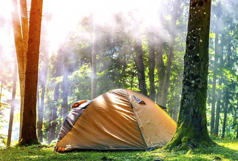 Tienda de campaña en bosque verde por mañana soleada de la primavera con la niebla ha imagen de archivo libre de regalías