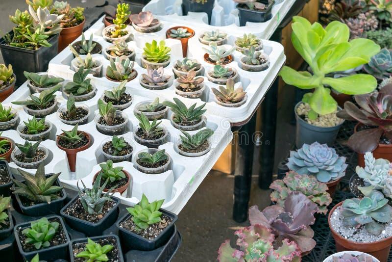 Tienda de la calle de los houseplants de la flor Diversos tipos de Cactu suculento imagen de archivo libre de regalías