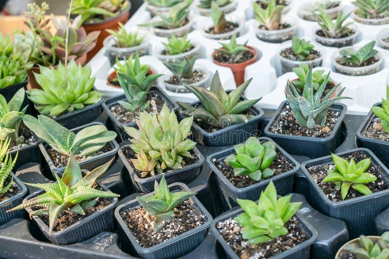 Tienda de la calle de los houseplants de la flor Diversos tipos de Cactu suculento imagen de archivo