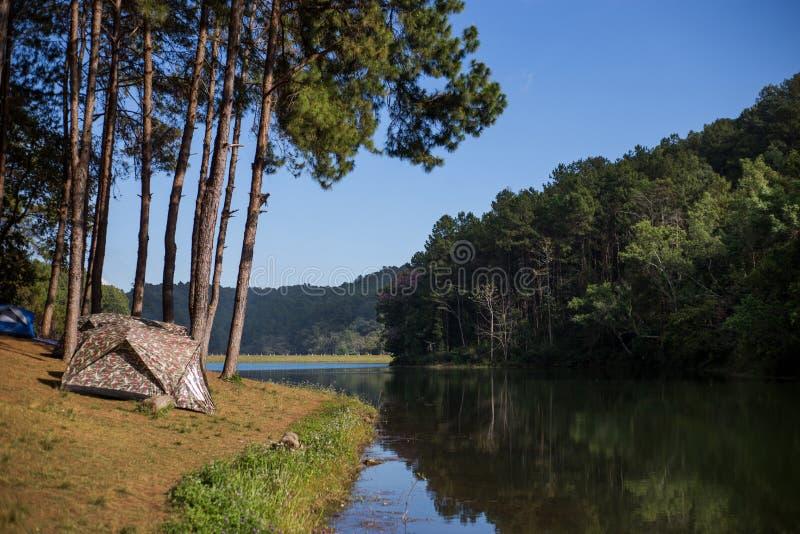 Tienda debajo del bosque del pino en la mañana contra el sunligh brillante fotografía de archivo libre de regalías