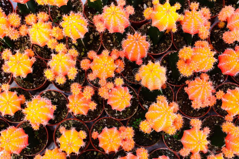 Tienda del árbol del cactus con la cría en la casa imagen de archivo