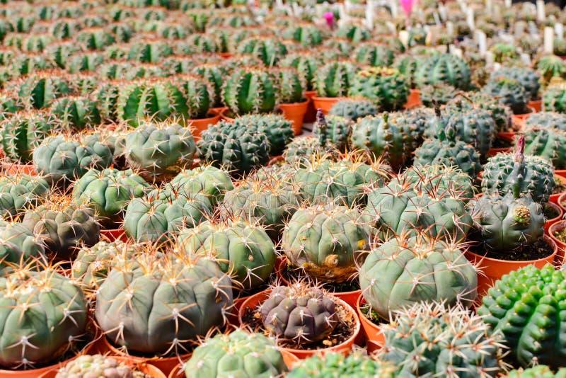 Tienda del árbol del cactus con la cría en la casa imagenes de archivo